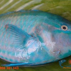 Cá mó xanh