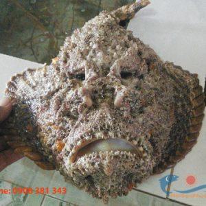 Cá mặt ma tươi sống